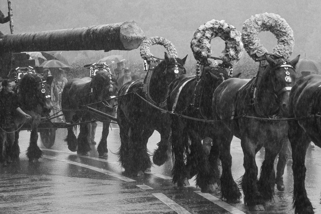 paardenparade zwart-wit
